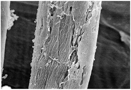 Algodon Al Microscopio De Barrido