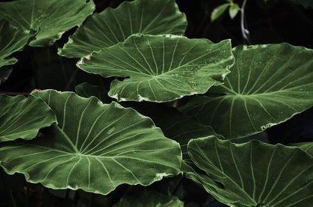 Esta hoja artificial imita el proceso de la fotosíntesis y convierte C02 en metanol y oxígeno