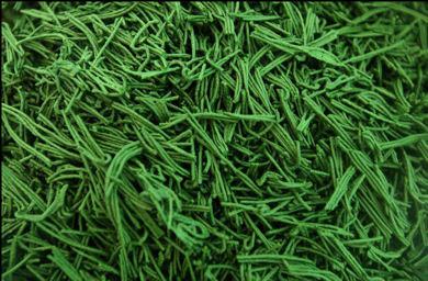Espirulina, el alga de los deportistas