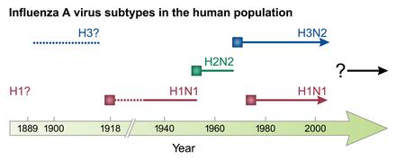 Influenza Subtypes Pngversion