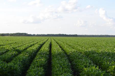 Cómo mejorar nuestra alimentación aumentando el consumo de proteínas vegetales