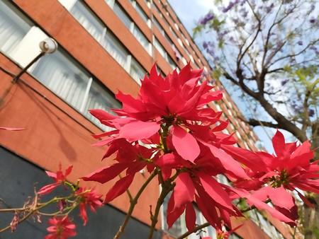 Oppo A9 2020 Primeras Impresiones Mexico Prueba Camara 48 Megapixeles