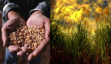 Situación alimentaria mundial, comemos más alimentos de los que se producen, un informe dramático que nos advierte