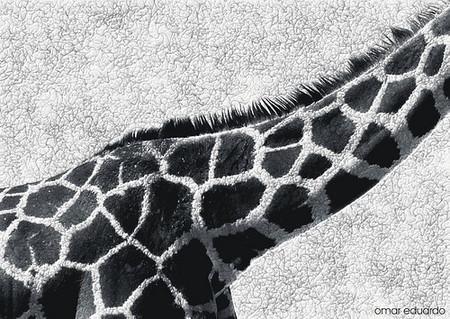 manchas girafa