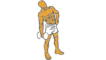 flexion-tronco