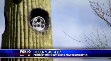 En Arizona esconden cámaras de tráfico... ¡en cactus!