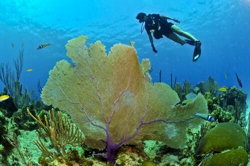 Practicar submarinismo en Centroamérica: estos son los mejores lugares
