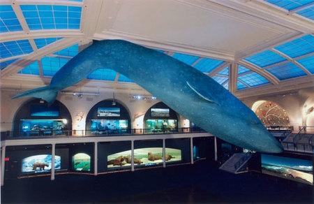 Dormir en un museo: Museo Americano de Historia Natural