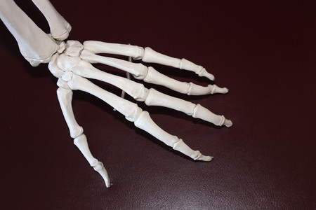 Skeleton 778069 1920