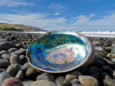Tu próximo smartphone podría estar hecho de este vidrio más fuerte inspirado en la capa interna de los caparazones de los moluscos