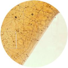 Foto 5 de 6 de la galería bebidas-bajo-el-microscopio en Directo al Paladar