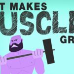 Vídeo-animación, ¿Qué hace a tus músculos crecer?
