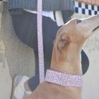 Tu perro se merece el mejor regalo de San Valentín, y Brott Barcelona viene al rescate