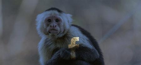 Descubren una red de grupos de Facebook que traficaban con animales en peligro de extinción en Tailandia