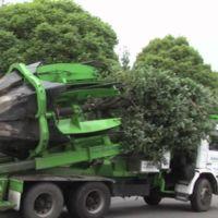 [Vídeo] Recolocadora de árboles