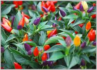 Las charlas entre vecinos mejoran la salud de las plantas