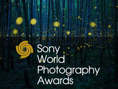 La mejor foto de naturaleza de los Sony World Photography Awards
