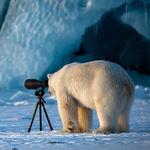 Estas son las fotos de animales más divertidas según el Comedy Wildlife Photography Awards 2018