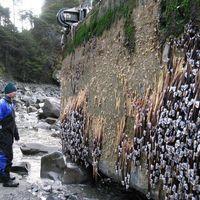 Gracias a la basura, los animales viajan a países separados por océanos