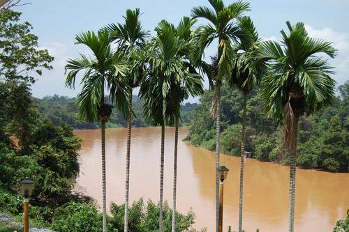 Visitando Malasia, dos días en la selva de Taman Negara