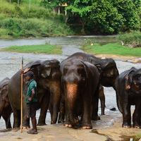 Poco a poco, el cambio climático está agravando los conflictos entre los humanos y los animales