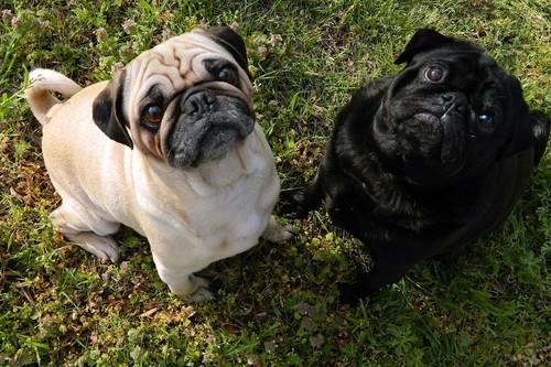 12 compras básicas para tu mascota que encontrarás en Amazon