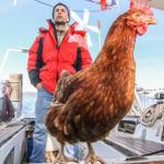 La historia del hombre que dio la vuelta al mundo... con una gallina