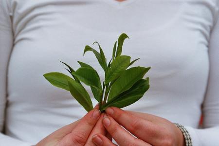 Plantas medicinales: ¿una ayuda contra los kilos de más?