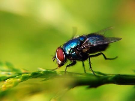 fotografias-de-insectos-25.jpg