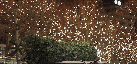 Transportar un árbol de Navidad en el auto puede ser peligroso, por eso te damos estos consejos para hacerlo de manera segura