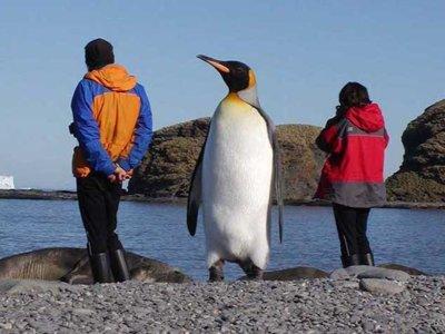 Este pingüino era más alto que tú (y probablemente también pesaba más que tú)