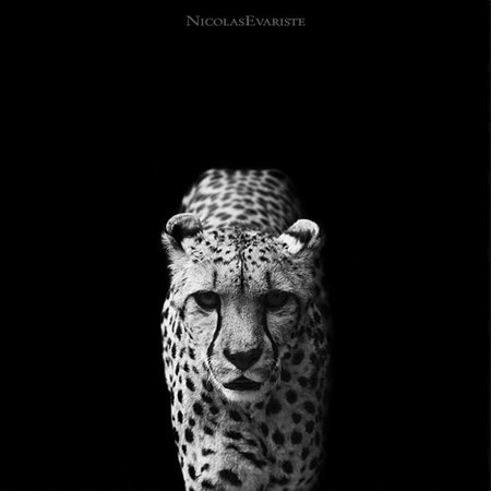 Descubriendo fotógrafos: Nicolas Evariste