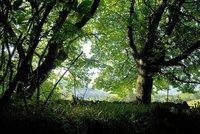 El año de los bosques