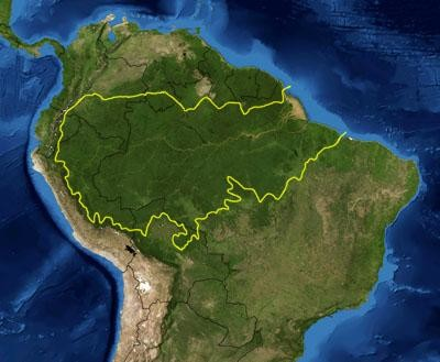 Éste es el impresionante tamaño que tiene la mayor selva tropical