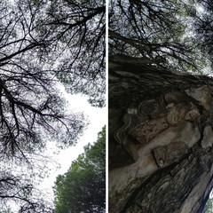 Foto 6 de 9 de la galería lg-g6-camara-principal-vs-angular en Xataka