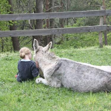 Canciones populares infantiles: 'A mi burro'