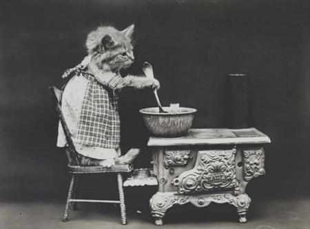 Delirantes e hilarantes fotografías de gatitos de la época victoriana
