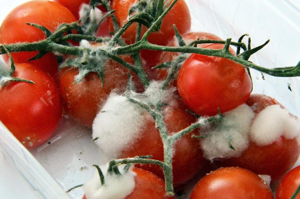 Si un alimento tiene moho, no te lo comas: por qué no basta con quitar la parte mala de las frutas y otros alimentos