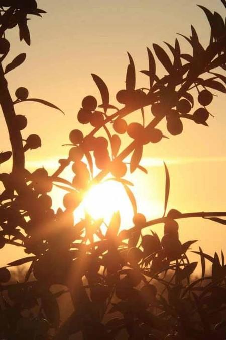 El aceite Innoliva, número 1 en el ranking Top Worl Best Olive Oil