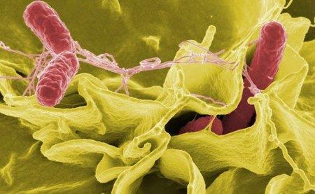 Brote de salmonelosis posiblemente causado por leche artificial