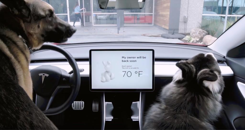 Modo Perro y música a todo volumen para evitar robos: las nuevas actualizaciones de Tesla para sus coches