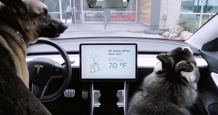 Tesla le pone a sus coches un nuevo modo Perro y música a todo volumen para evitar robos