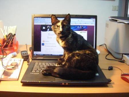 Mascotas en casa (II): los sitios prohibidos