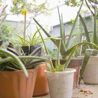 Hay un boom de aplicaciones que prometen ayudarnos a mantener vivas nuestras plantas, una bióloga nos dice si son o no de fiar