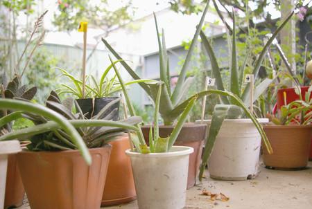 Hay un boom de aplicaciones que prometen ayudarnos a mantener vivas nuestras plantas y una bióloga nos dice si son o no de fiar