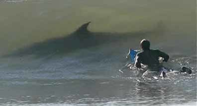 tiburon