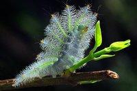 Las espectaculares fotografías de naturaleza de Sam Lim