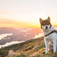"""""""Decidí abandonar mi trabajo y aventurarme junto a mi perro"""": La historia de Akiak y Henrik"""