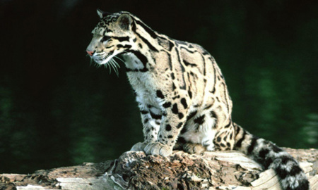 iSlate llevará Mac OS X 10.7 Clouded Leopard... (o no)