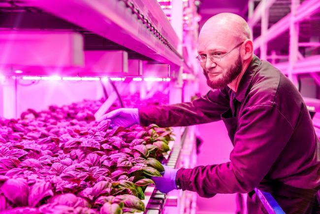 Philips pone luz LED a la carta para cultivar en interiores